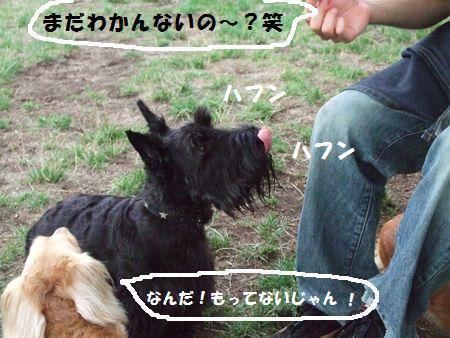 20070808233619.jpg