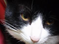 「みやう」猫の日です^^;;
