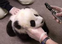 panda060105.jpg