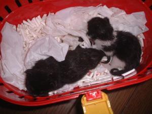 070925子猫2匹保護b