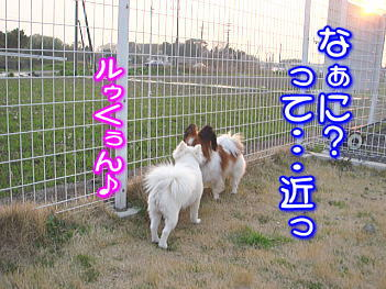 20070710111006.jpg