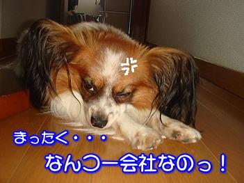 20070717172124.jpg