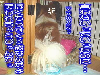 20070729232635.jpg