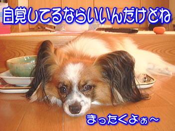 20070818115609.jpg