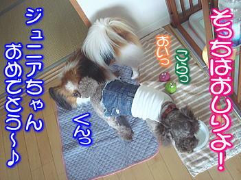 20070821160938.jpg