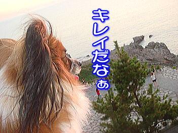 20070826194109.jpg