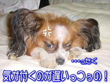 20070828003724.jpg