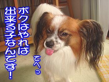 20070903210118.jpg