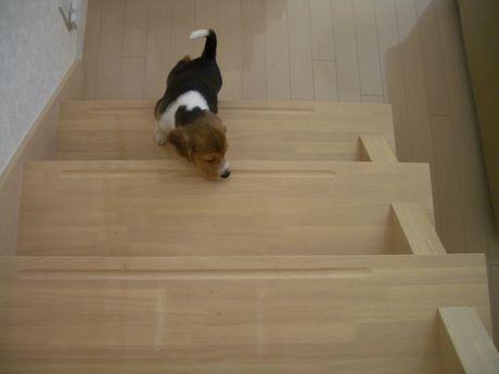 階段のぼれるかな?