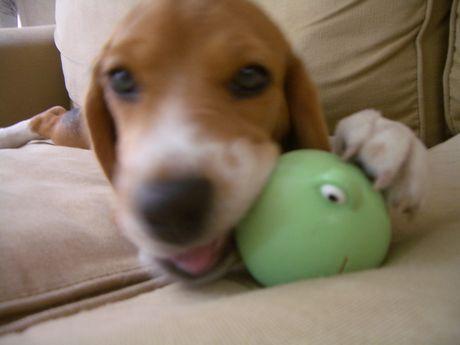 音の鳴るおもちゃが、たまらなく好き!
