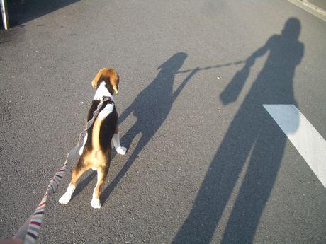 影も、元気にお散歩だよ!