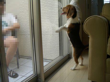 パパ~!ぼくも出たいよ~!