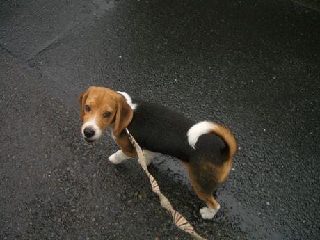 散歩は、いいねぇ~!