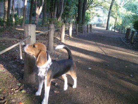 朝の公園は、きもちい~い!