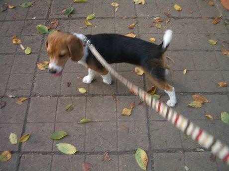 落ち葉のタイルカーペット♪