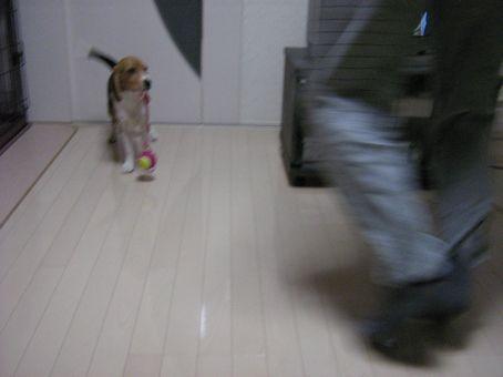 パパ・・・!追いかけてね!