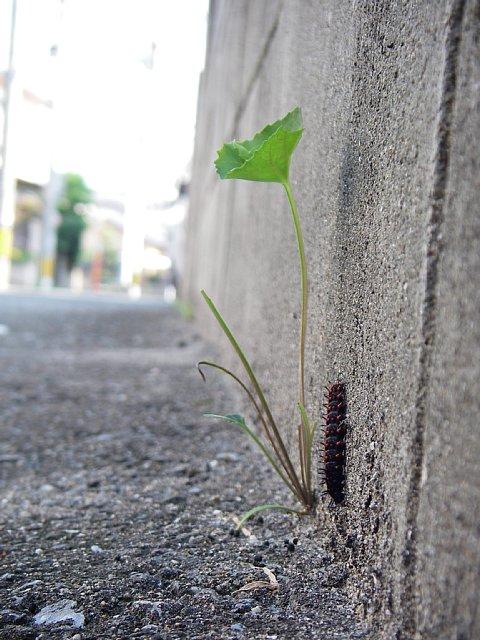 路地裏のツマグロヒョウモン