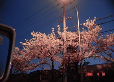 060410_06_sakura.jpg