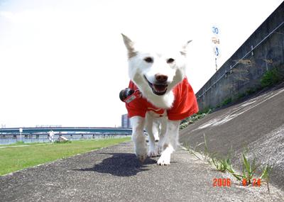 060424_02_02_muko.jpg