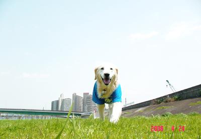 060424_04_01_oozora.jpg