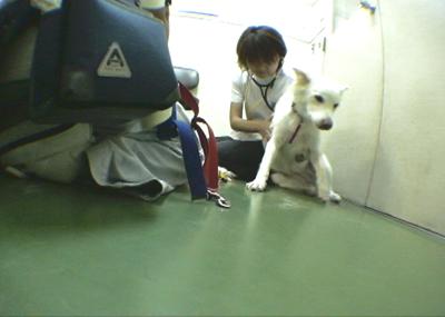 060808_02_shinsatu_06.jpg