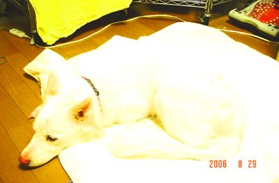 060829_furo_11.jpg