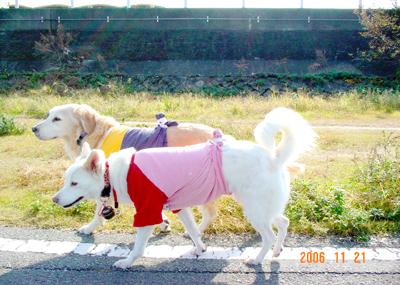 061121_01_kensa_04.jpg