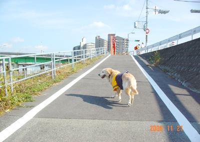 061121_01_kensa_06.jpg