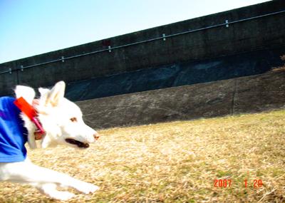 070129_hiruma_07.jpg