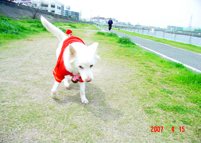 070415_02_hirusan_05.jpg