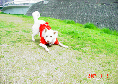 070415_02_hirusan_07.jpg