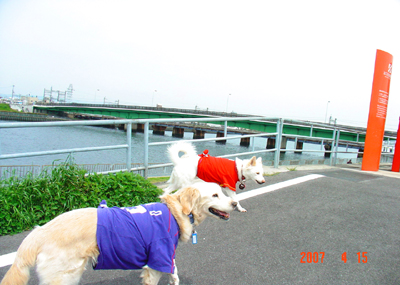 070415_02_hirusan_10.jpg