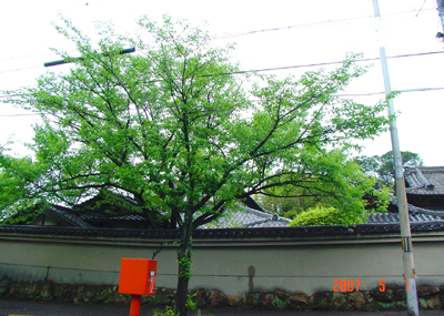 070501_05_shinsatu_03.jpg