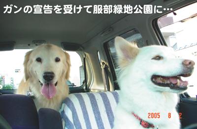 070618_10_05_050802_hatori.jpg