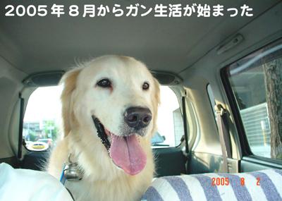 070618_10_06_050802_hatori.jpg