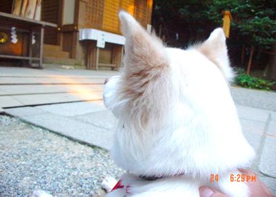 070724_19_zabu_02.jpg