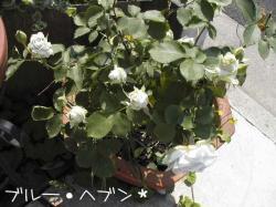PIC_0010.jpg