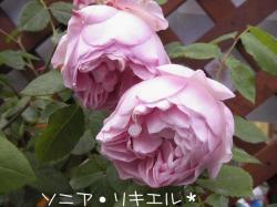 PIC_0026.jpg