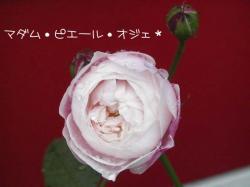 PIC_0046.jpg