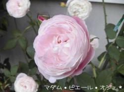 PIC_0089.jpg