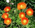 西区の花 春