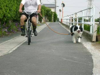 そら・・久しぶりの自転車散歩・・もう終わりなの!!