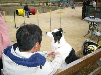 3/26パールちゃん(ドックランにて・・)