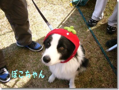 イチゴちゃん・・ぼこちゃん