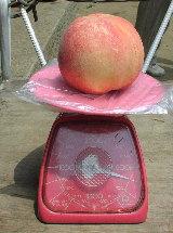 600gの桃を収穫しました