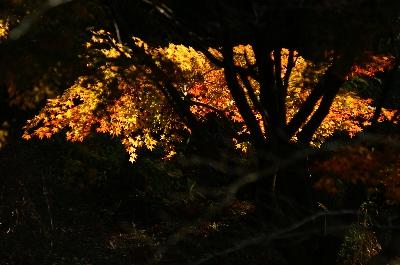 まっくら森にも秋が来ました