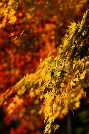 秋ですねぇ。