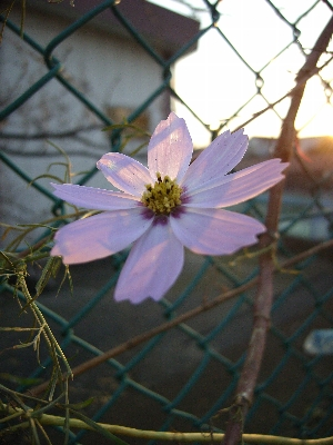 透過光で見る花の美しいこと...