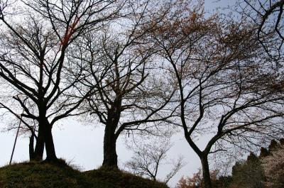 殿塚の堀から頂上を見る