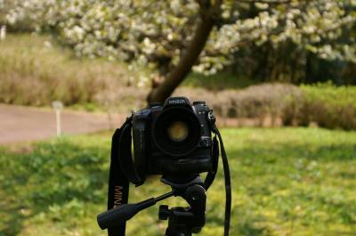 写真撮ろうぜ。